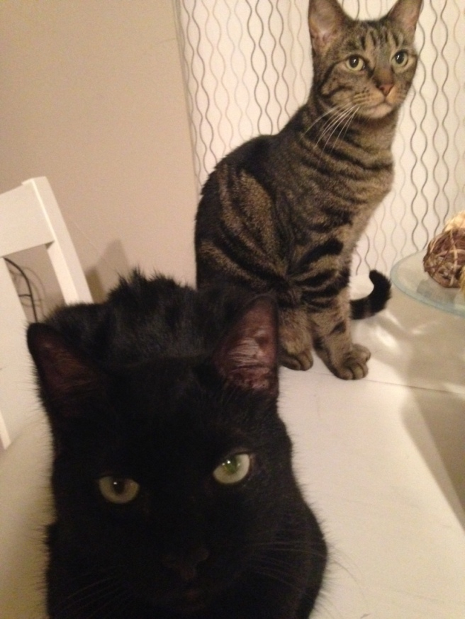 Zelda is the tabby and Fitz is the black cat with the
