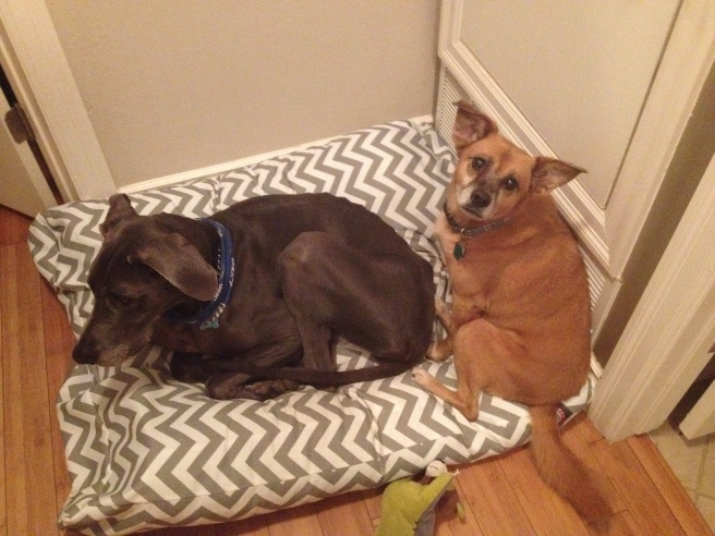 Greta sharing her dog bed with her best friend Pearl.